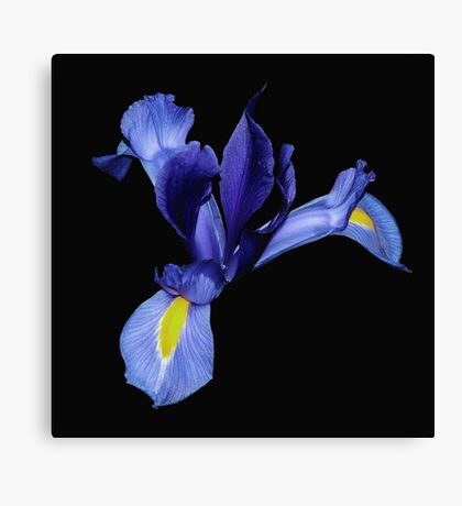 'Yellow and Blue' Canvas Print