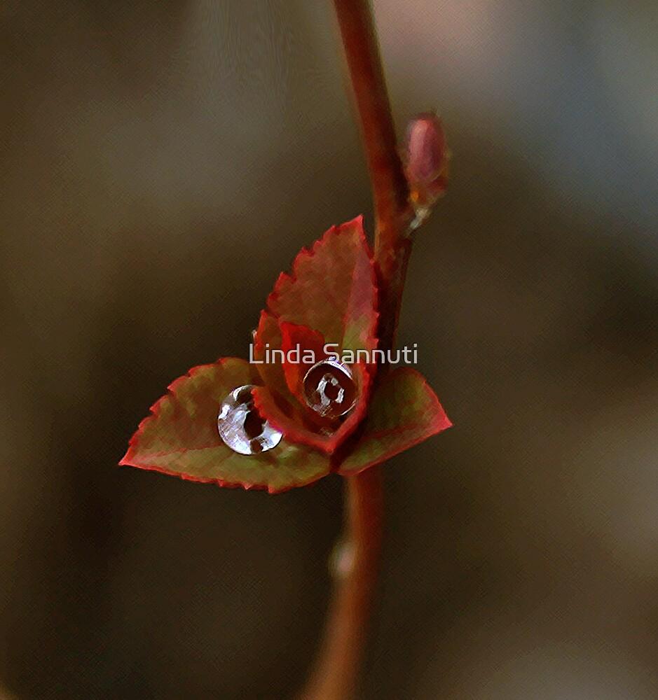 water eyes by Linda Sannuti