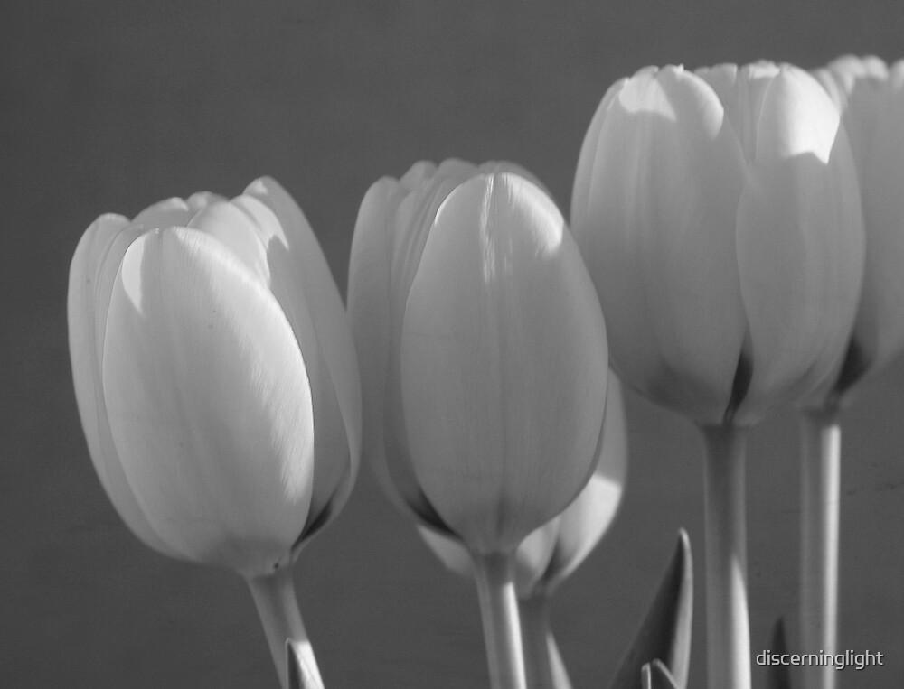 Tulips in B/W by discerninglight