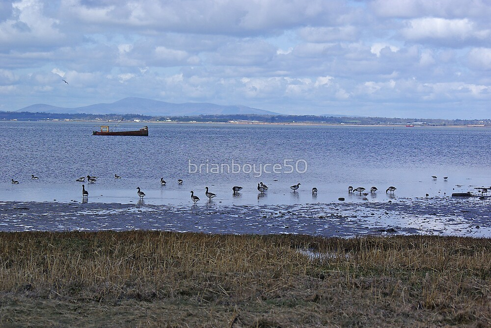 Brent Geese by brianboyce50