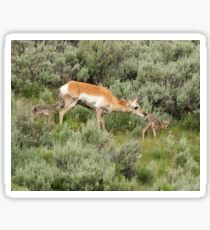 Pronghorn Mother Sticker