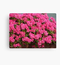 Pink bunches Canvas Print
