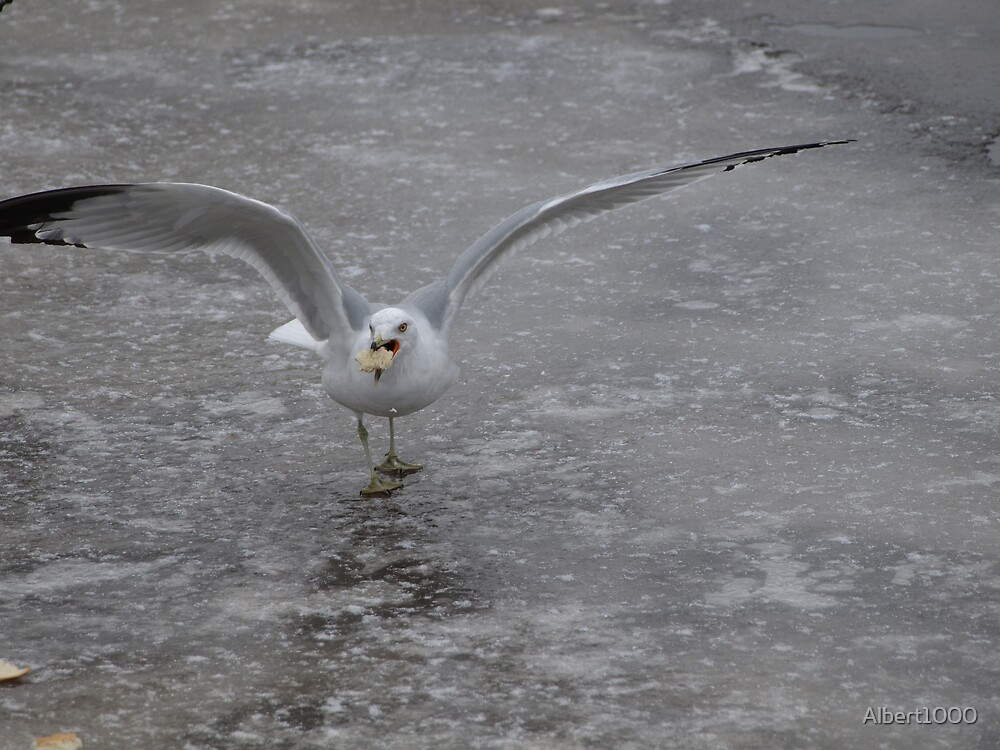 NC Seagulls on ICE by Albert1000