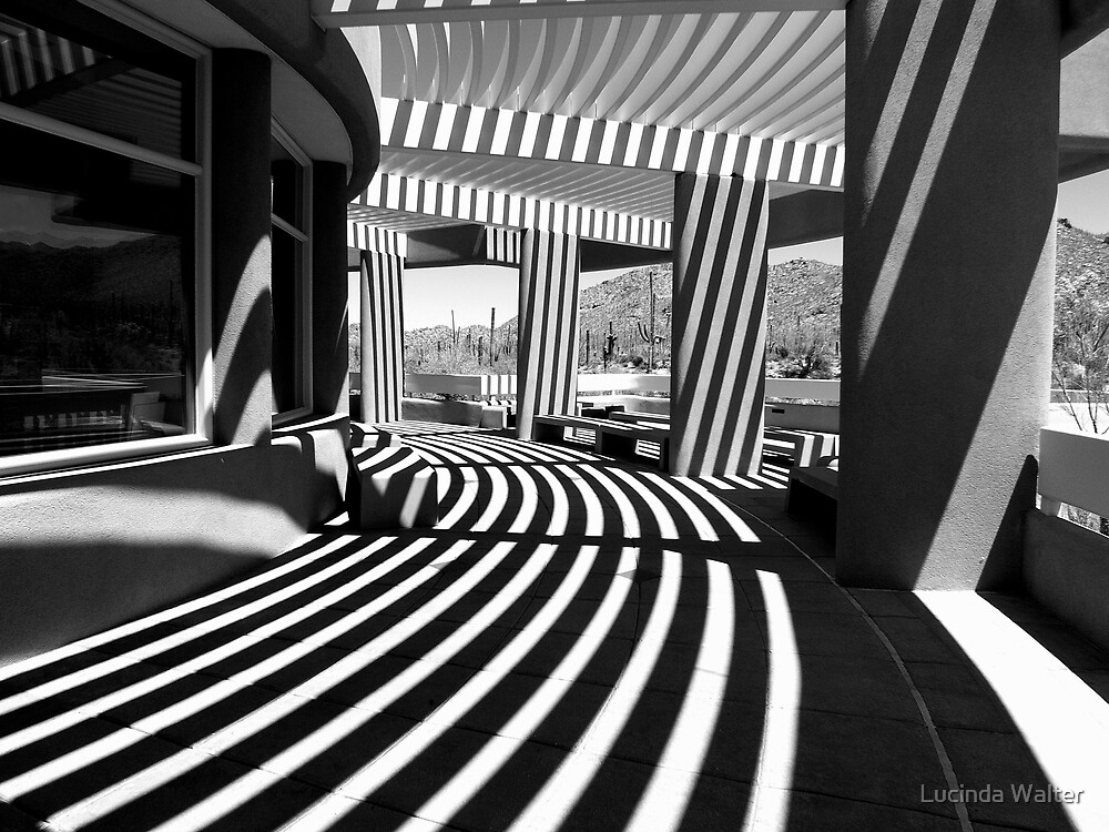 Lines and Curves by Lucinda Walter