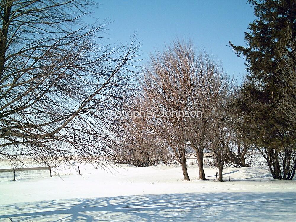 Mixed Winter Trees at Iowa Farm - Horizontal View - Feb 2008 by Christopher Johnson
