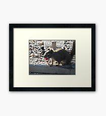 Raspberry Thief Framed Print
