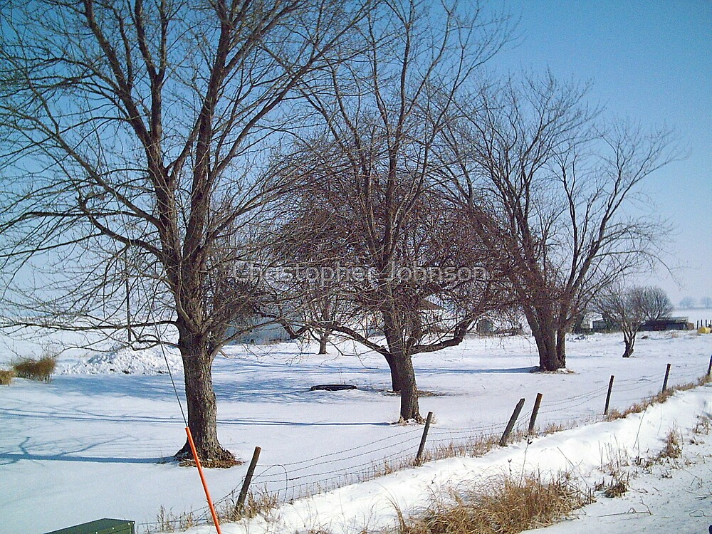 Old Trees Along the Iowa Farm - Feb. 2008 by Christopher Johnson