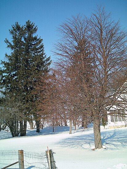 Trees by the Farm House - Iowa Farm - Feb. 2008 by Christopher Johnson