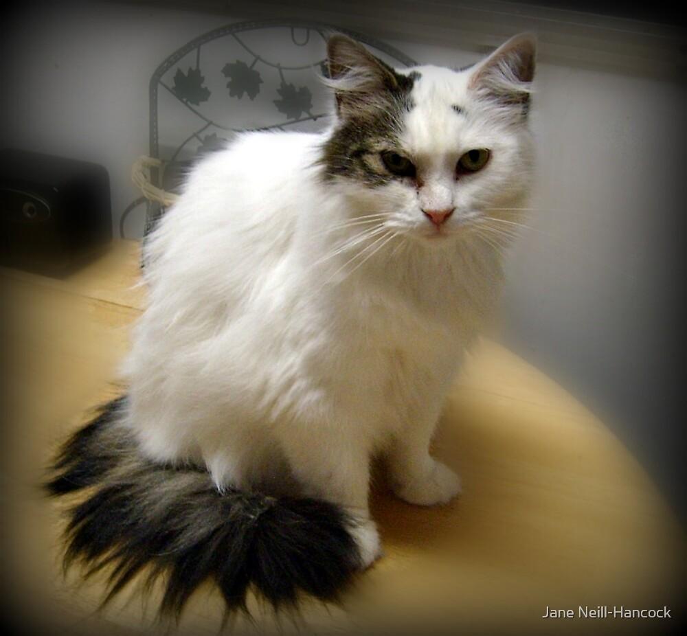 My Sweet Little Boo (Norweigan Forest Cat) by Jane Neill-Hancock
