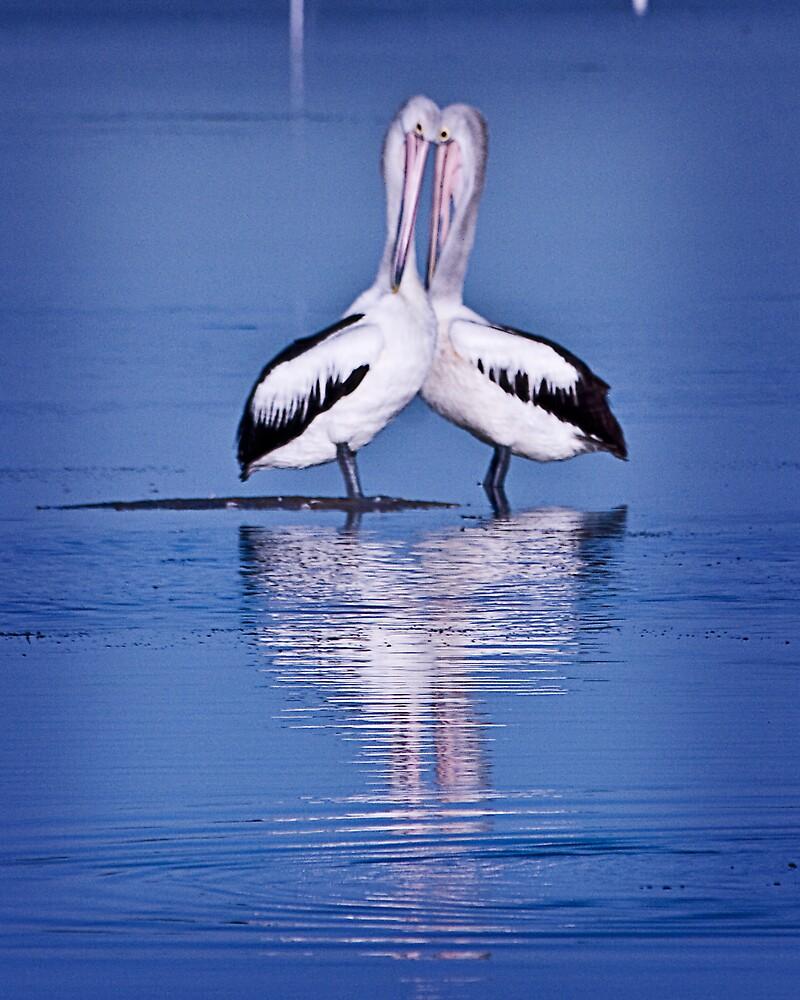 Pelican ballet by Maggiebee