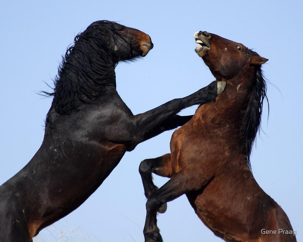 Stallion Joust by Gene Praag