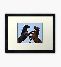 Stallion Joust Framed Print