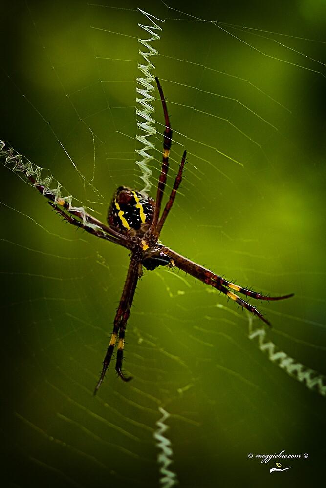 St Andrews Spider by Maggiebee
