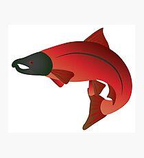 Coho Salmon Color Illustration Photographic Print