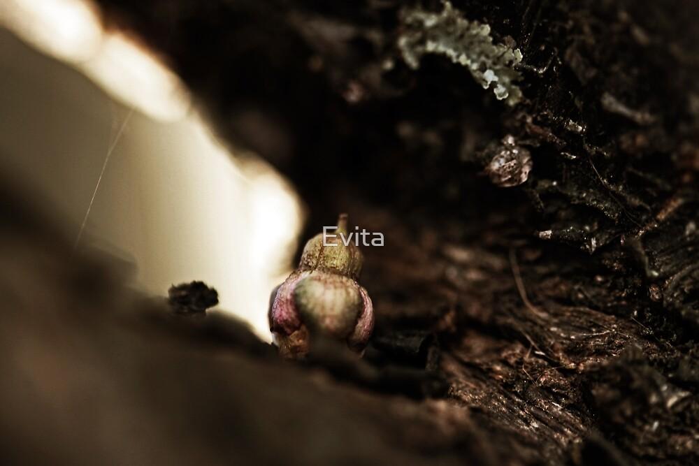 Hidden by Evita