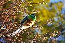 Australischer Papagei # 2 von Evita