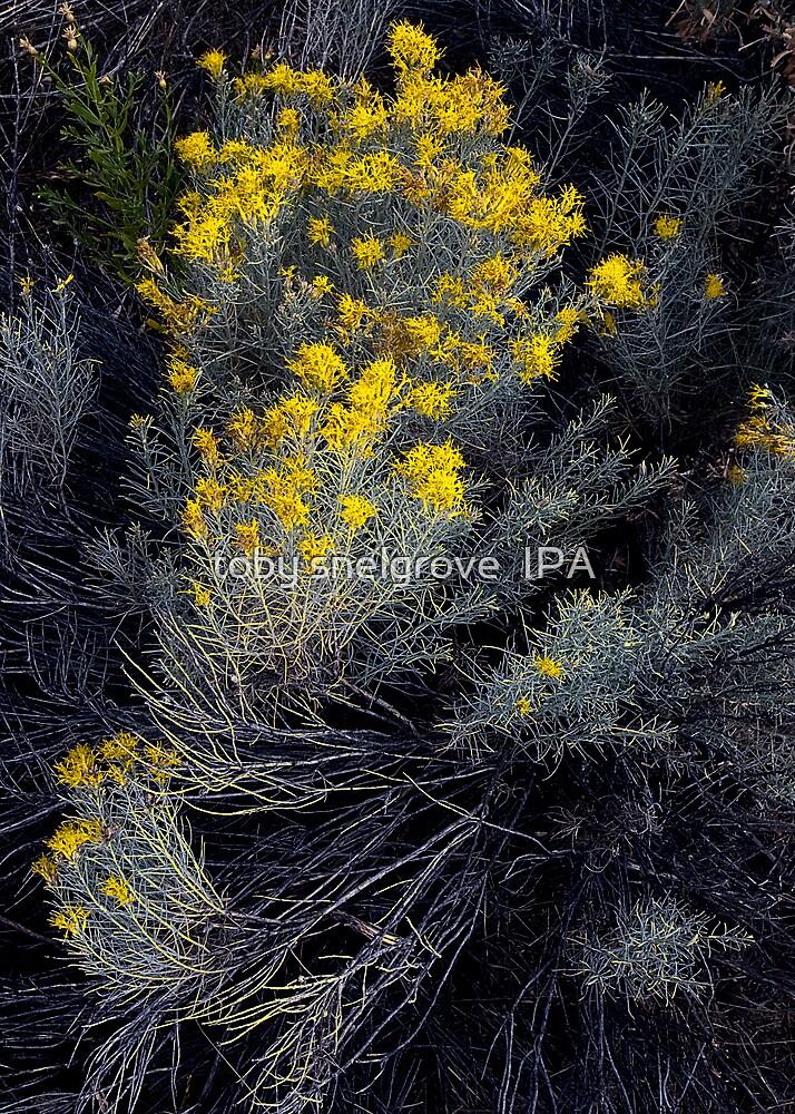 Desert Flora by toby snelgrove  IPA