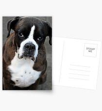Arwen -Boxer Dogs Series- Postcards