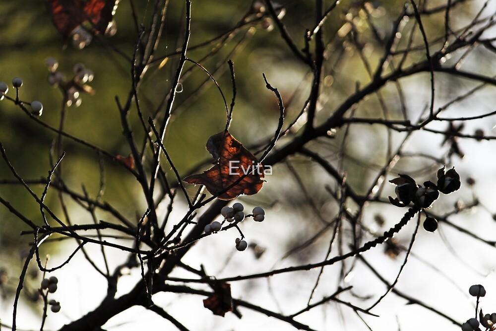 Still Hanging-Winter Series- von Evita