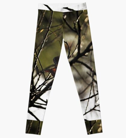 Still Hanging-Winter Series- Leggings