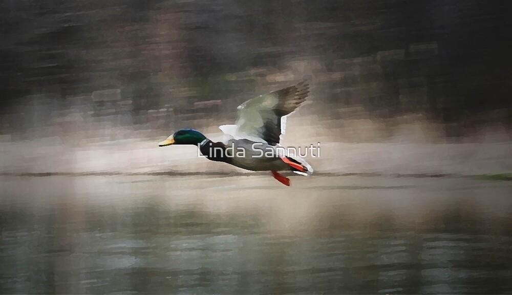 flying duck by Linda Sannuti