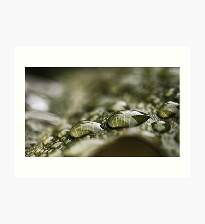 Regentropfen auf einem Blatt Kunstdruck