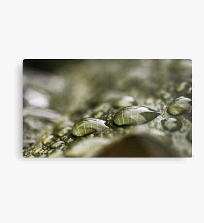 Regentropfen auf einem Blatt Metalldruck