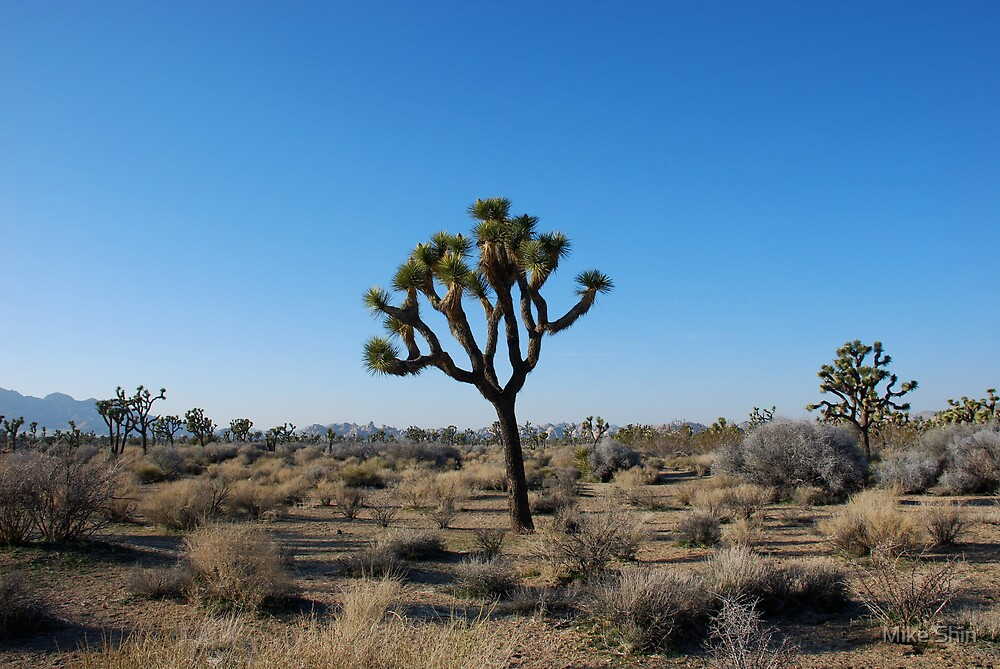 Joshua Tree by Mike Shin
