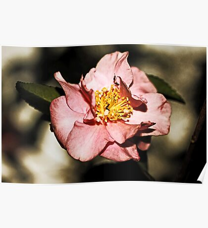 Not Just Another Pretty Camellia Poster