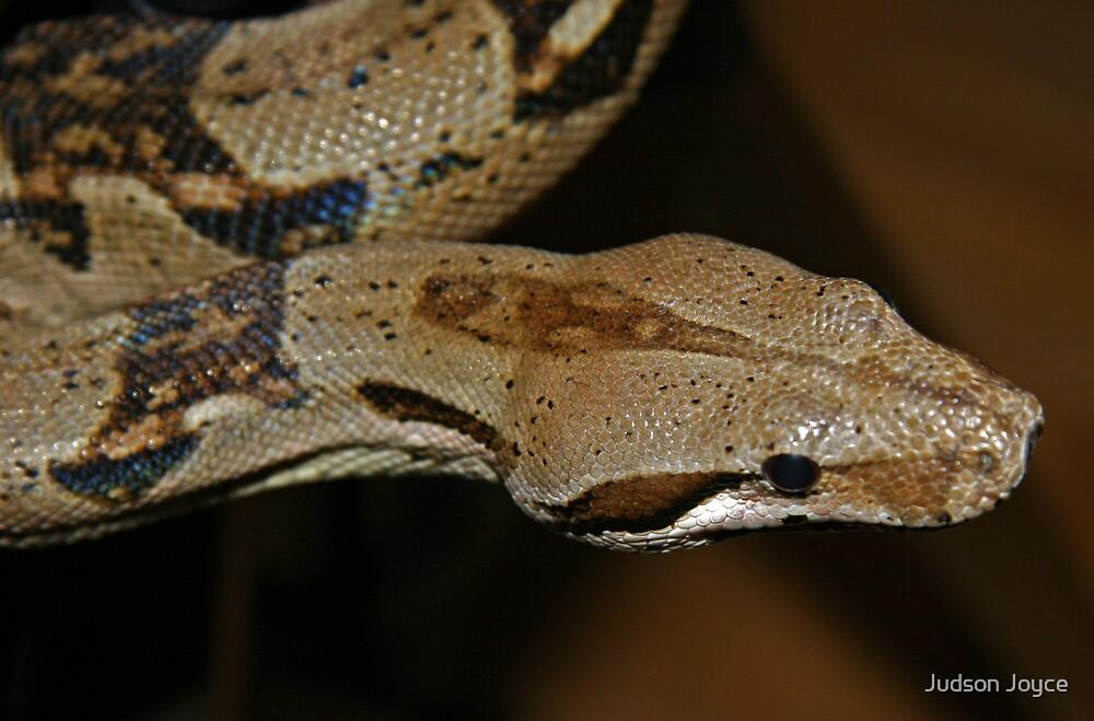 Slithering Snake by Judson Joyce