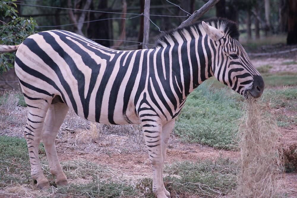 Zebra by ewboraine
