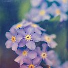 Forget Me Not by OLIVIA JOY STCLAIRE