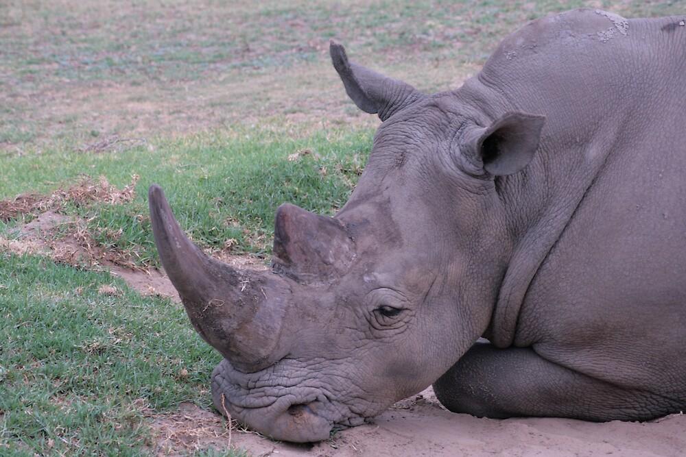 Rhino resting by ewboraine