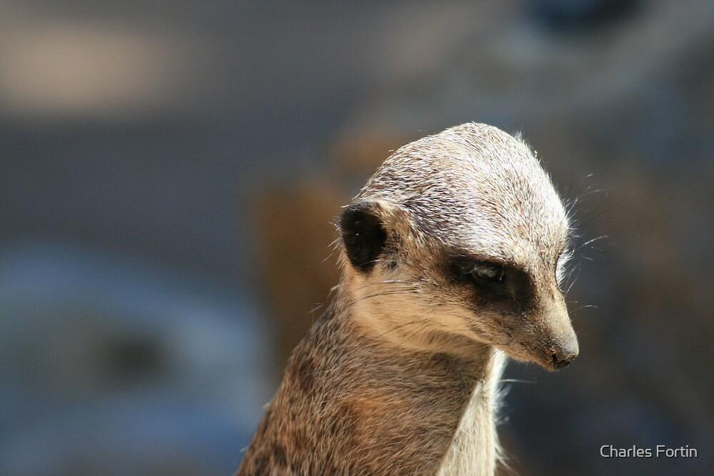 Sad Meerkat by Charles Fortin