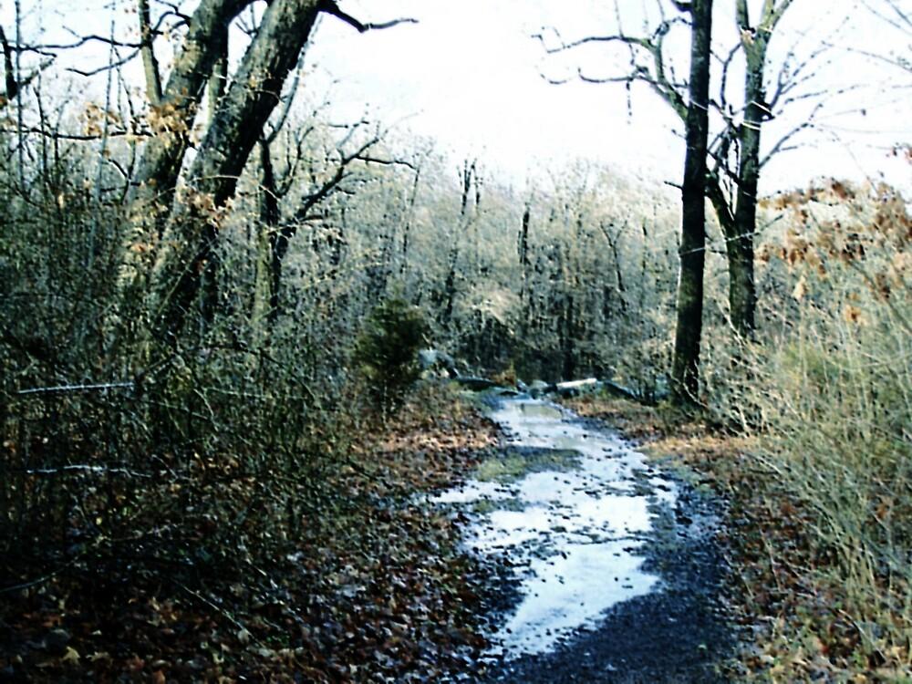 A wet path by Judi Taylor