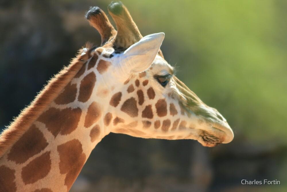 Giraffe by Charles Fortin