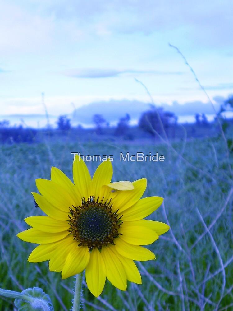Sun Flower by Thomas  McBride
