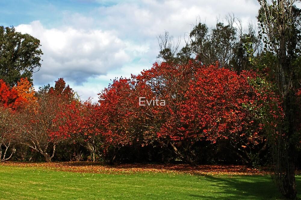 Autumn Colours by Evita