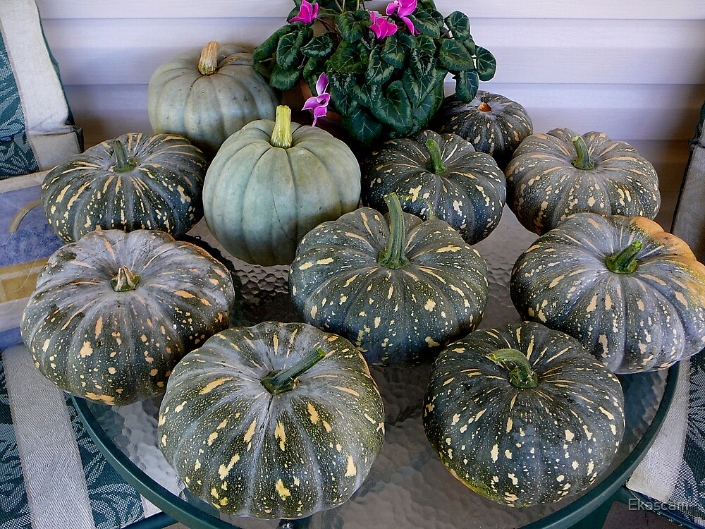 BACKYARD PUMPKINS A DELIGHT by Ekascam