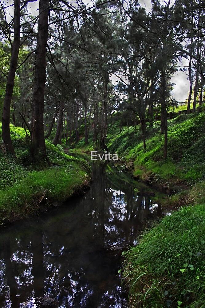 Picton Botanic Garden NSW by Evita