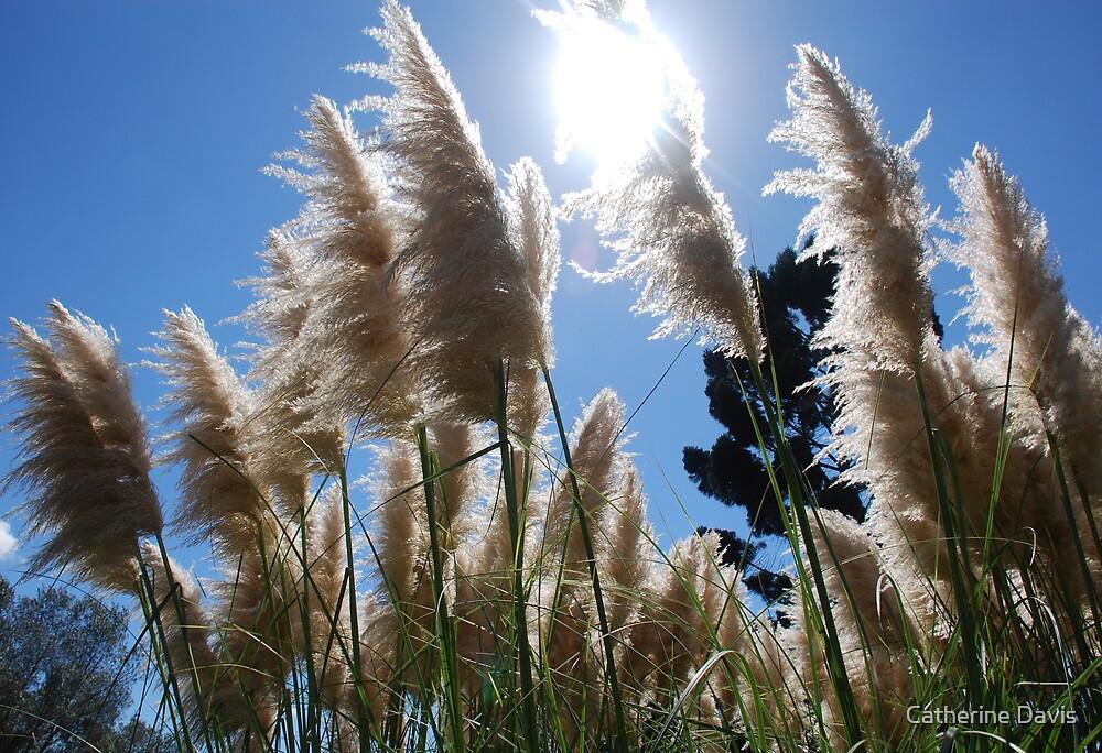 Pampas Grass by Catherine Davis