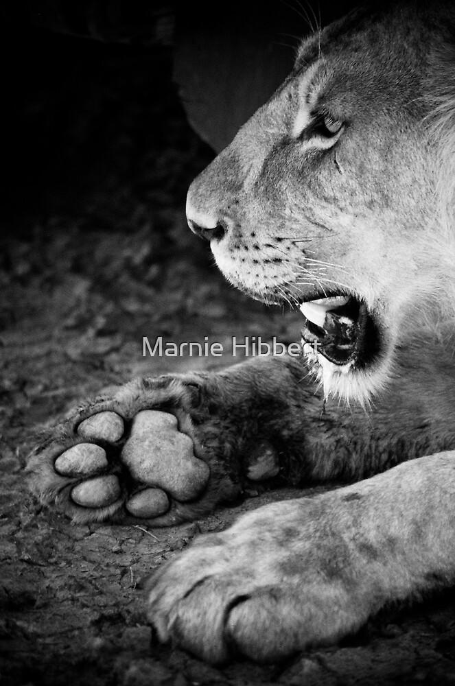 Lion Paw by Marnie Hibbert