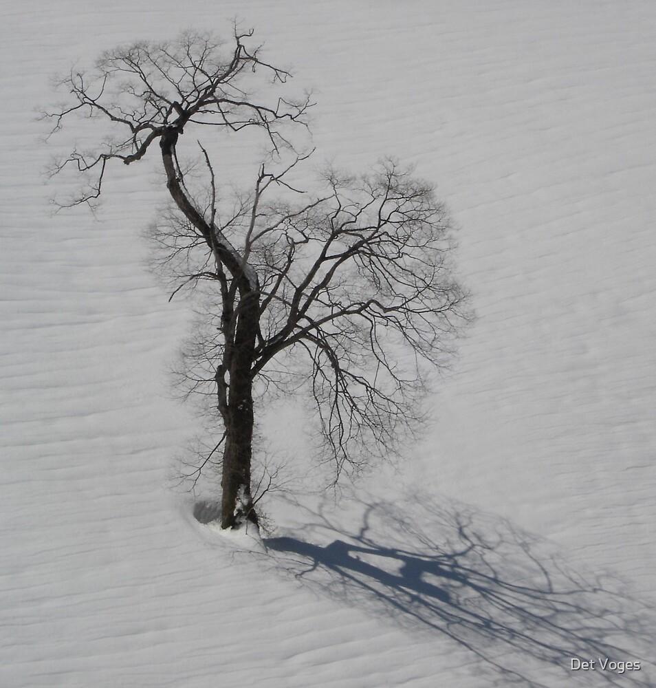 Solo Elm by Det Voges