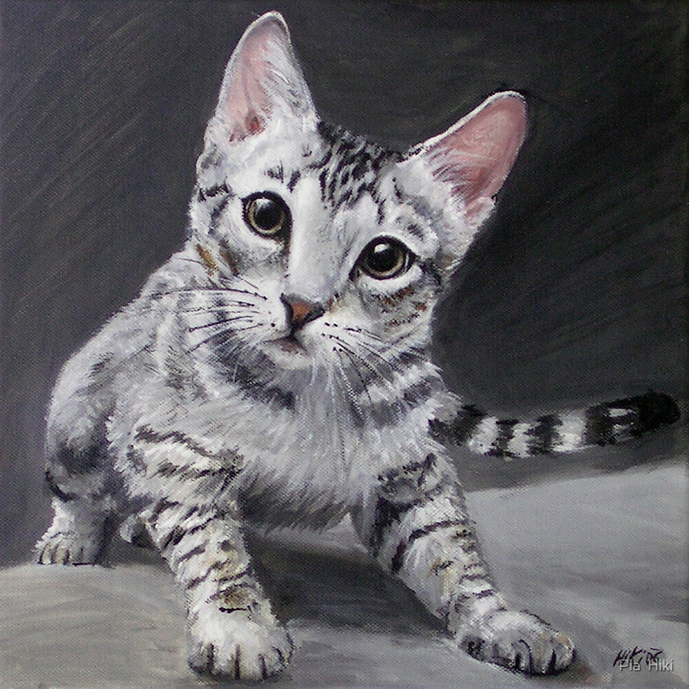 Ocicat Kitten by Pia  Hiki