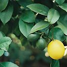 Lemonish by reflexio