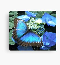 Pretty Blue Butterfly Canvas Print