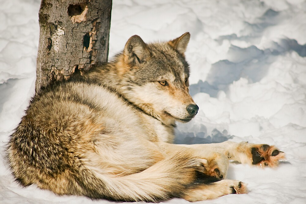 Lazy Day in Winter by StephenCoyle