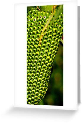 Plant by Ken Simm