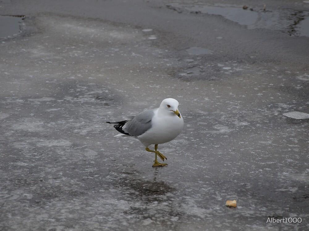NC Seagull #2 by Albert1000