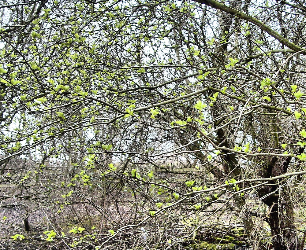 Hawthorn today 29th March by hilarydougill